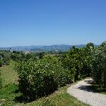 view from the patio of the Poggio del Drago