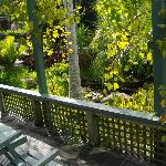 View from deck to fish pond