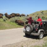 Open-Air Jeep in the interior gives you that close up look at the Bison