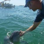 Blue Dolphin experience, while adventures at sea pontoon watches