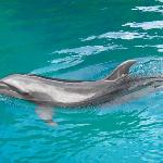 Dolphins Pacific Foto