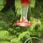Hummingbird at Feeder on Deck