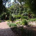 Adelaide Botanic Garden