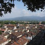  A view of Lucca from Torre Guinigi