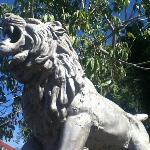 Lion in the park!