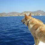 Mascot doggie loved to stand on the edge of the boat and feel the breeze