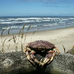 A crab that washed ashore.. I set it (on the 'balcony' rail to scare my husband..)