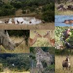 Φωτογραφία: Mpongo Private Game Reserve