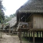 Jungle Wolf lodge in the Amazon Jungle