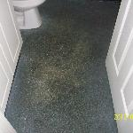 Mold and Mildew in the carpet