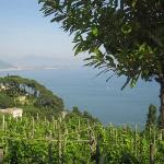 I Heart Italia - Vineyard Adventures
