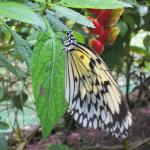  now a full bloom butterfly