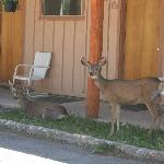 Wildlife at the Lodge
