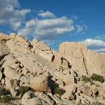 "Joshua Tree - ""Wonderland of Rocks"" Area"