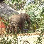 Elephant in Leopard Rock Lodge