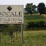 Bocale Vini