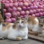 Cats among the onions, Empress Market