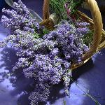 NEOB Lavender - Niagara Essential Oils & Blends