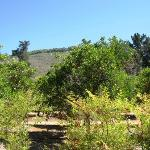 Gorgeous location with orange groves and mountains