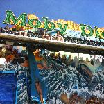 Moby Dick ride...fun for most ages!