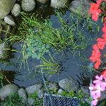 little pond under our balcony