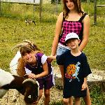  Children feeding a friendly goat.