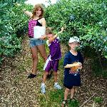  Children picking blueberries
