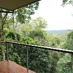 View of the forest from the balcony