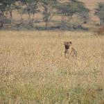Hyena right outside our truck