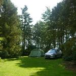  Our lovely pitch at Clippesby Hall, surrounded by mature trees, calm and sunny