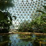 Tropical Display Dome