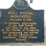 Boll Weevil Monument