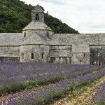 Abbaye Notre-Dame de Sénanque; fascinating + close to B&B