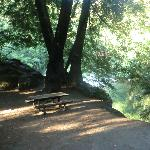 Big Sur Campground & Cabinsの写真