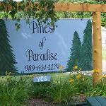 The Pines of Paradiseの写真