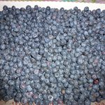 Blueberries from Milburns