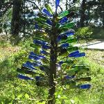Fun bottle tree found on our walk on the property