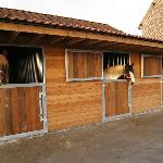 Stables for rent