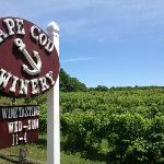 Cape Cod Winery