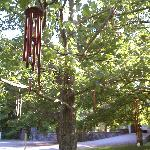 "The ""wind chime"" tree"