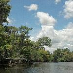View while canoeing down Loxahatchee River