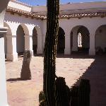 Cactus en el patio central