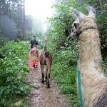 Smoky Mountain Llama Treks