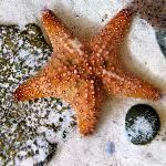 feel a starfish in the touch tanks!