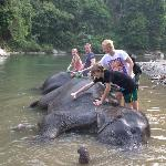  Washing the elephants