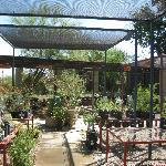  Palo Verde Garden Center at the Living Desert!