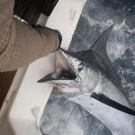 Wild Blue Fishing Charters