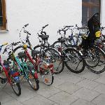 Bicycles free to use - all sizes