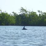 Cocoa Beach Kayaking Day Tours