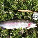  Rainbowtrout